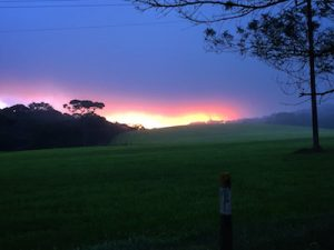 Sunrise through the fog at Horton Plains National Park on our way to World's End, Sri Lanka.