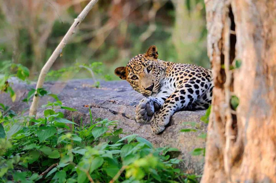 Sri Lanka's Wildlife Tours