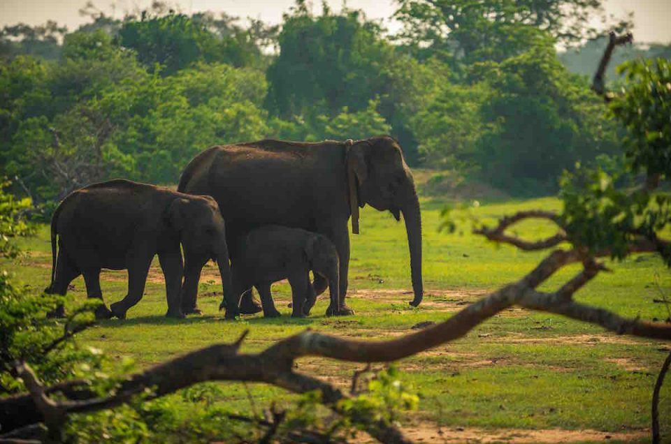 Why animal and history lovers wont miss Yala National Park